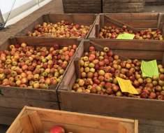 Vente de pommes et de pommes de terre du 6 au 17 octobre - Les Saveurs de la ferme