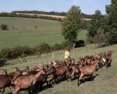 DELLA-TORRE Angélique et BELCAID Rachid - Les Saveurs de la ferme