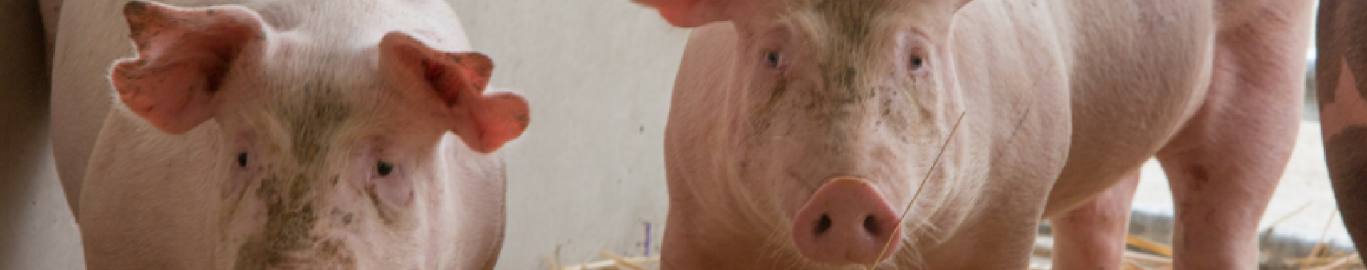 E.A.R.L Laboure - Les Saveurs de la ferme